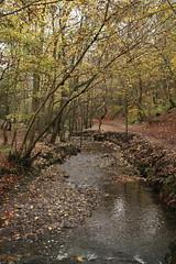 IMG_8937 (Geoff_B) Tags: badockswood bristol walkinthewoods autumn november unprocessed unedited