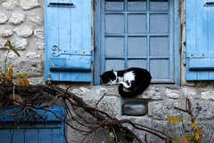 Le repos du guerrier (Nadia L*) Tags: chat cat pet animal fentre window bleu blue talmontsurgironde