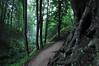 Fox Ravine near Jastrzebia Gora, Poland (RafalZych) Tags: lisi jar fox ravine wąwóz morze bałtyckie baltic sea ostsee nikon d90 polska poland forest las sigma 1020 wideangle wide panoramic fog mgła foggy landscape outdoor tree plant path sciezka ścieżka