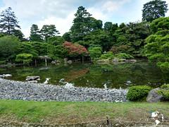 Kyoto Gyoen Garden (ComiendoXelmundo) Tags: wouldyoutravel world rtw huaweiathul06 huawei huaweishotx huaweihonor7i roundtheworld estilodevida descubriendoelmundo recorriendo travel travelblogger trip turismo kyoto style streetphotography smartphonephotography imperial visitjapan viajeenpareja viajes viaje visit ciudadesdelmundo cities kioto lifestyle turistas comiendoxelmundo conociendoelmundo palacio palacioimperial japan japon japn vacaciones gosho kyotogosho imperialpalace