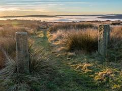 Path to the clouds (neil.bulman) Tags: countryside longshawestate peakdistrict nature nationalpark derbyshire longshaw fog cloudinversion inversion cloud nationaltrust sheffield england unitedkingdom gb