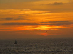Sailing to the Sunset (Kelson) Tags: sunset ocean california southerncalifornia southbay beach sailboat birds