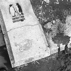 "Antarctica resisting. #turkishprotest #gezipark #istanbul #penguinprotest • <a style=""font-size:0.8em;"" href=""http://www.flickr.com/photos/8861229@N06/9062257282/"" target=""_blank"">View on Flickr</a>"