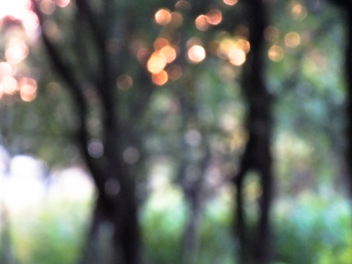 Bokeh Of Woods