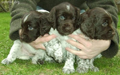 Filhotes de cachorros 64