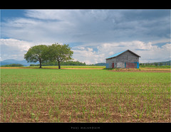 Two trees and a barn (Paul Malandain) Tags: summer green nature field japan hokkaido farmland lush hdr niseko twotrees cloudysky oldbarn kutchan canoneos50d efs18200mmf3556is