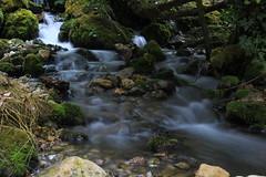 Stream (Damjan Gataric) Tags: vacation mountain tara canonefs1755mmf28isusm canon60d