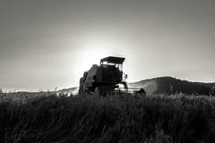 The oat crop (19) (a peaceful warrior) Tags: barcelona blackandwhite white black canon blackwhite spain harvest crop campo cosecha dust oat harvester calor polvo cosechadora
