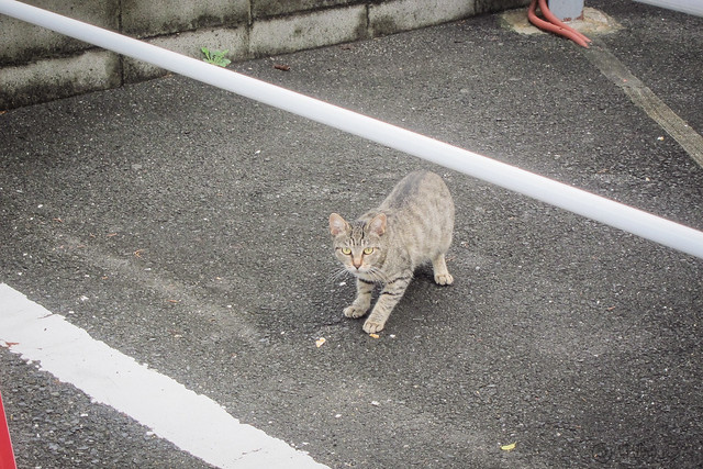 Today's Cat@2013-09-07