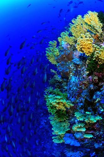fish and fish pantar island