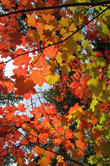 Enamering Leaves of Fall Two (Pictoscribe - Off in The Wilderness Til 7-30) Tags: autumn light color fall beauty spiritual tao 2013