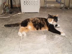 Autumn (universalcatfanatic) Tags: autumn orange cats white black cat cord gold golden bath basket floor bell cords room towel tortoiseshell plastic laundry rack calico tortie lay laying batroom