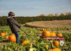 Pumpkin Patch (Detroit Imagery) Tags: fall apple pumpkins orchard westview