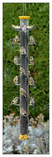 Happy Birds - Super Birdfeeder  Explored 20th Nov 2013 #65