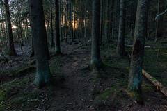 (Stelios Kirtselis) Tags: autumn fall nature forest canon suomi finland dark landscape wide 24mm maisema metsä syksy lightroom luonto puut 2013 synkkä luontokuvaus 5dmkii canon24mm28is