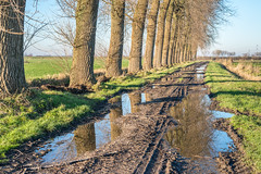 Country road after the rain (RuudMorijn) Tags: road morning blue autumn trees light sky sunlight reflection tree green fall texture reed nature water beautiful grass rain silhouette season landscape puddle evening bomen perfect colorful europe european ditch mud natur