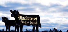 Blackstreet Angus (DancingTerrapin) Tags: ranch blue black clouds rural georgia cow angus farms ruralgeorgia