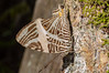 Borboleta (mcvmjr1971) Tags: macro brasil butterfly insect sãopaulo nikond50 borboleta