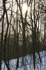 Winter Sun (Stewart_Cowan) Tags: park winter sun snow toronto canon highpark
