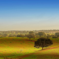 The olive trees (Eric Goncalves) Tags: blue trees winter sky color green portugal nature landscape view alentejo treescape canonef50mmf14usm canon7d ericgoncalves {vision}:{mountain}=0589 {vision}:{sunset}=0776 {vision}:{outdoor}=099 {vision}:{ocean}=0569 {vision}:{clouds}=0978 {vision}:{sky}=099 {vision}:{car}=0737
