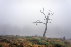 (Mimadeo) Tags: wood old morning light mist tree texture broken nature fog landscape dead death wooden haze stem ancient alone branch bare dry bark stump mysterious trunk lonely aged rough solitary barren cracked crooked snag misterious