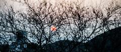 23 (ColectivoCineCaribe - Cinematography) Tags: santa sea sun tree sol contrast arbol nikon colombia paisaje contraste marta caribbean silueta siluet rodadero magdalena caribe d7000