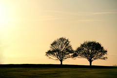 A View for Two (mashapopovic) Tags: uk autumn summer england sun tree golf season landscape bath somerset course