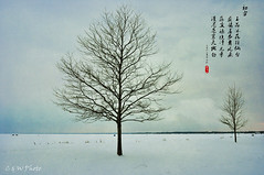 Solitude (guizhou2012) Tags: trees texture nature nikon solitude gloomy michigan greysky frozenlake winterlandscape metropark winterinmichigan snowcoveredlake memoriesbook