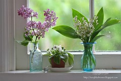 2014.05.10SpringFlowers01 (ivoryblushroses) Tags: flowers spring blossoms plum lilies valley lilacs