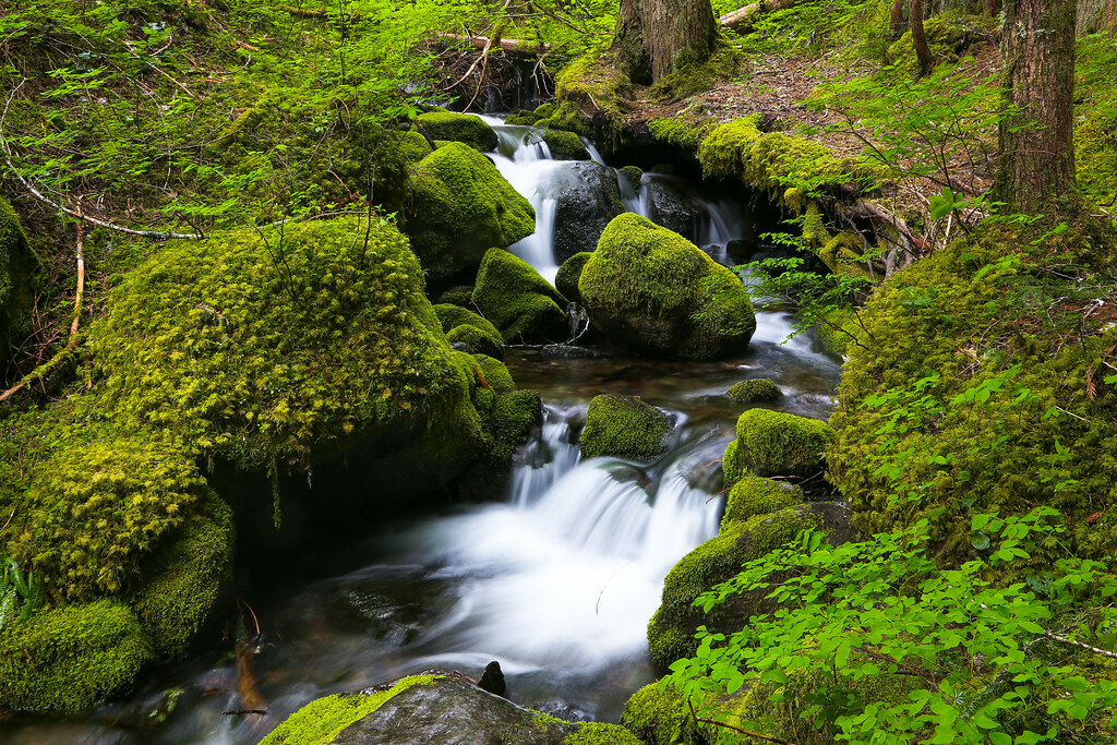 Spring Green, Mount Rainier National Par by Joe Parks, on Flickr
