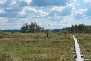 Walking path of Siikanevan soidensuojelualue