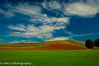 Rolling colors (amohanlal) Tags: us2016 grapes wines nature earth colors landscape napavalley wallpaper sky world california clouds