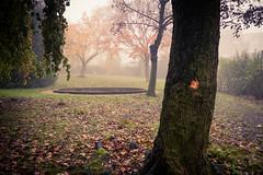 Fin de saison... / End of Season (Gilderic Photography) Tags: autumn liege belgium belgique belgie mist fog woods park mystery automne mystre brume gilderic panasonix lx3