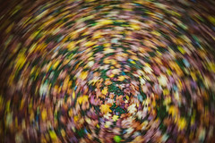 Autumn Leaves #284/365 (A. Aleksandraviius) Tags: autumn leaves leaf swirl effect motion twirl 2016 nikkor nikon d810 20mm f18g 365days 3652016 nikond810 20mmf18g afdnikkor20mmf18ged nikkor20mm nikon20mm18g nikon20mm 365 project365 284365 blur