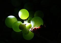 In the limelight (Goruna) Tags: grape fruit trauben limelight lightspot contrast goruna berries