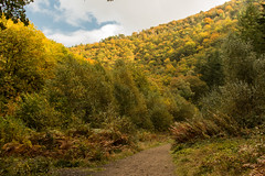 Autumn woodland splendour (Keith in Exeter) Tags: autumn woodland trees landscape hill valley track teign dartmoor nationalpark devon england uk outdoor