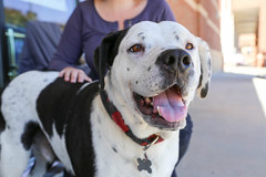 aveda-5699 (angelsrescue) Tags: aau pets angels among us pet rescue alpharetta ga dog love