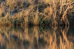 20160825_ZambeziReflectionsLandscapes_MCM-3 (mcmessner) Tags: abstract africa bjadventures morning morningboatride reflection rorschak southafrica2016 sunrise tongabezilodge water zambeziriver zambia livinstone