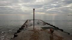Groyne (andreboeni) Tags: groyne preston beach weymouth dorset moody sky sea weather change dog boxer boxerdog coast pier