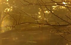 ... () Tags: autumn webs fog light tree