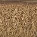 No meio das plantações de trigo