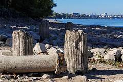 Rhine River Ruins (Poet for Life) Tags: ruins river rhine bonn wood