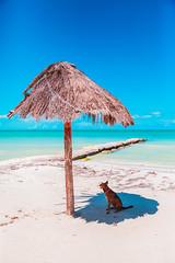 Dog in Shade (Luis Montemayor) Tags: dog holbox mexico shade sombra sea ocean mar oceano perro