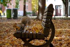 (Le Chibouki frustr) Tags: autumn automne fall colors colours squirrel cureuil cureuils parclafontaine plateaumontroyal nikon nikond100 d100 montral montreal