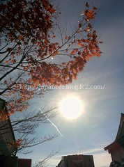 151212 (finalistJPN) Tags: sunshine daylight autumnleaves mapleleaf contrail autumnsky colors discoverjapan visitjapan japanguide nationalgeographic discoverychannel stockphotos availablenow