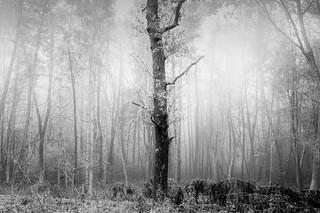 bäumeBAUMbäume
