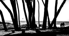 328#365 Intrighi (Fabio75Photo) Tags: tree people white black sfondo mare astratto
