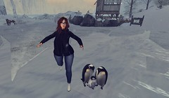 #776 (AddisonLynnRose Residnet) Tags: second life sl winter virtual photography fashion penguins truth hair catwa glam affair collabor88 maitreya blossoms blueberry lushish poses the frozen fair drift destination destinations landscape