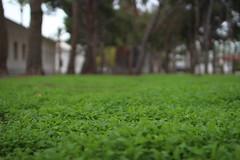 Little nature (alexsv92) Tags: