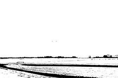 2 (Arjan Grendelman) Tags: blackwhite arjangrendelman lyrics lightroom6 white birds 2 netherlands friesland nature cows rivers zeissmmountlenses zeisszm35mm28cbiogon